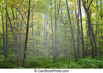 Forest - Colorful forest in the day time for natural...