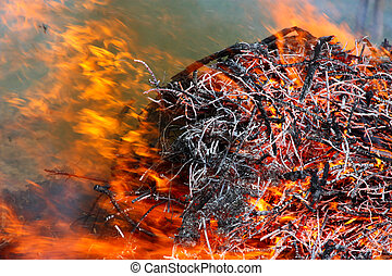 Forest conflagration in the  foreground