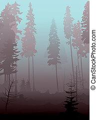 forest., conifero, foschia