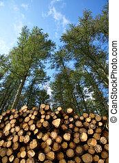 forest., coupure, fraîchement, arbres, pile