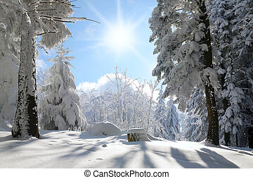 forest covered by the snow