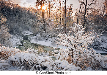 Forest creek after winter storm