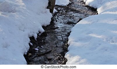 Forest creek, winter