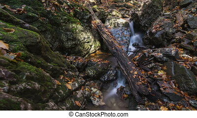 Forest creek with leaves in autumn time lapse dolly shot