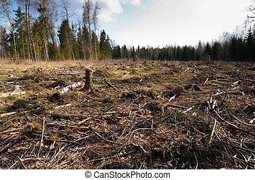 forest cut - landscape of cutted forest