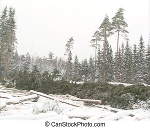 forest cut works winter