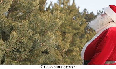 Forest decoration - Santa Claus decorating fit-trees in...