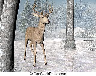 Forest Deer - Deer in a winter forest