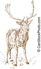 Forest deer with branchy horns in sketch style. Hand drawn...