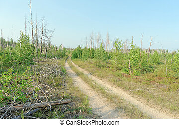 Forest dirt road in central Russia.