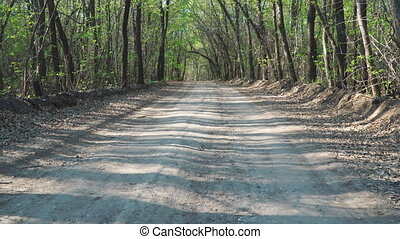 Forest dirt road in the summer