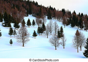 forest edge in winter
