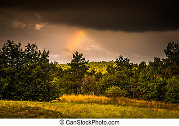 Forest Edge with Rainbow