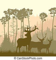 forest., elch, rand, wild