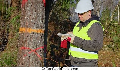Forest engineer with a tablet PC