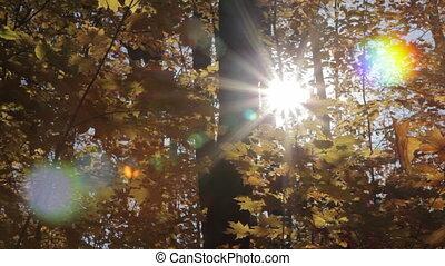 forest., ensoleillé, automne