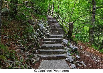 forest., escaleras, verde