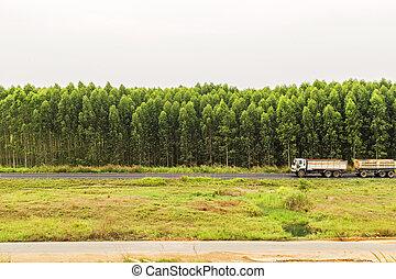 forest., eucalyptus, vieux camion, route