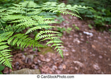 Forest Fern Leaves