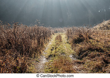 forest field road in the rays of the rising sun, early morning in Russia, Ural district forest