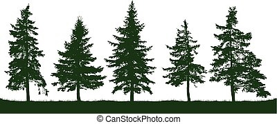 Forest fir trees silhouette. Christmas tree. Coniferous green spruce. Vector on white background, isolated objects. Parkland, park, garden