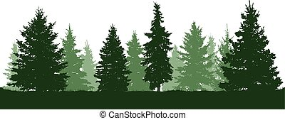 Forest fir trees silhouette. Coniferous green spruce. Vector...