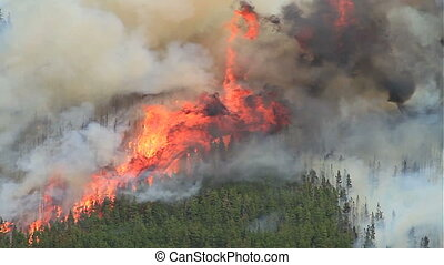 Forest Fire 10 - Huge flames and smoke from a large forest ...