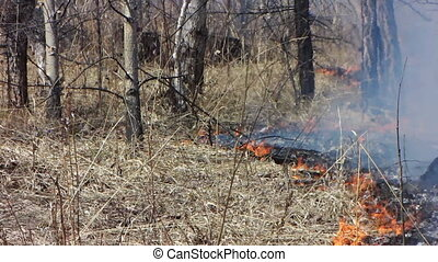 Forest fire 17 - Fire in the dry grass field.