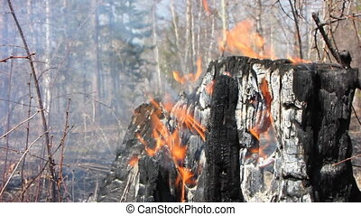 Forest fire 19