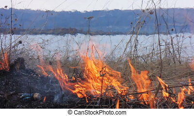 Forest fire 39 - Fire in the dry grass field.