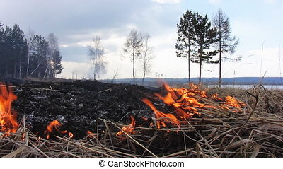 Forest fire 41 - The Fire in wood.