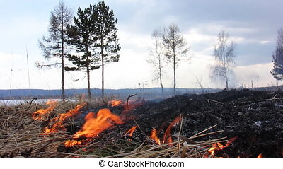 Forest fire 42 - The Fire in wood.