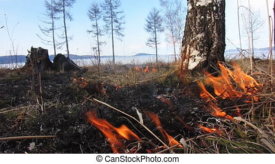 Forest fire 44 - The Fire in wood.