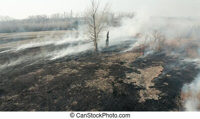 Forest fire aerial - Field grassland fire at spring, large ...