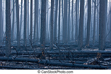 Forest fire aftermath - The charred remains of a pine forest...