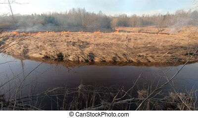 Forest fire and field fire, dry grass burns. A bushfire burning, spring Wildfire. Wild Fire burns stubble on the field