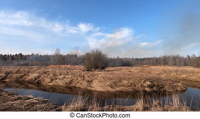 Forest fire and field fire, dry grass burns. A bushfire burning, spring Wildfire. Wild Fire burns stubble on the farm
