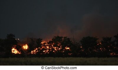 Forest fire at night - Burning trees, fire and smoke at...