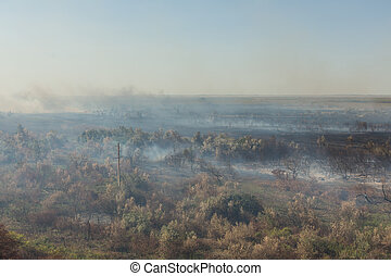 Forest fire. Burned trees after wildfire, pollution
