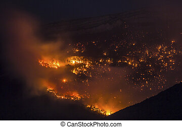 Forest fire burning at night