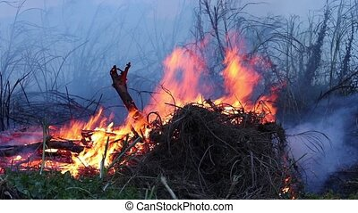 Forest fire Bushes are burning, the air is polluted with...