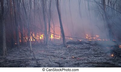 Forest fire - Close video of forest and fire, burning trees ...
