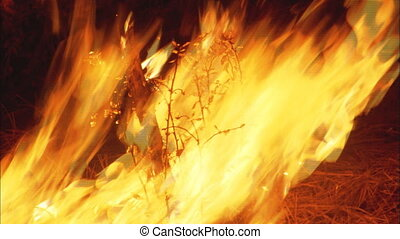 Close up of a fire in a forest burning a small tree