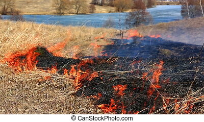 Forest fire: dry grass burning to ashes