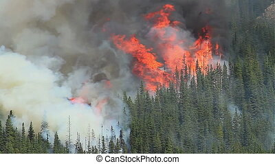 Huge flames and smoke of a large forest fire in the Rocky Mountains