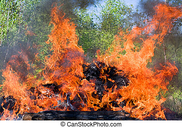 forest fire - Forest fire. fallen tree is burned to the ...