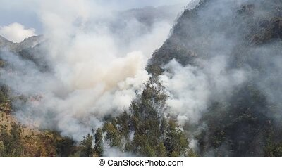 forest fire in the mountains - fire in mountain forest....