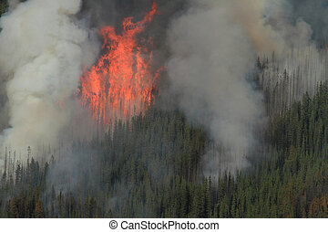 Forest Fire in the Rocky Mountains 03 - Huge flames burning...