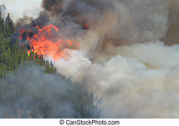 Forest Fire in the Rocky Mountains 10 - Huge flames burning...