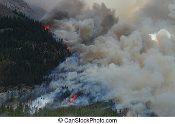 Forest Fire in the Rocky Mountains 11 - Huge flames burning...